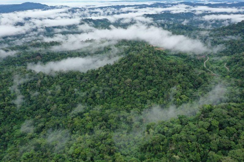 Los bosques tropicales modernos de la BBC son densos, con copas densas, a diferencia de las del final del Cretácico (Foto: Getty Images vía BBC)