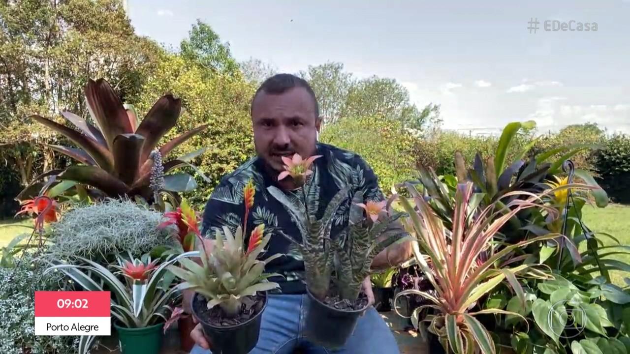 Murilo Soares ensina Juliana Paes a estimular a floração das bromélias