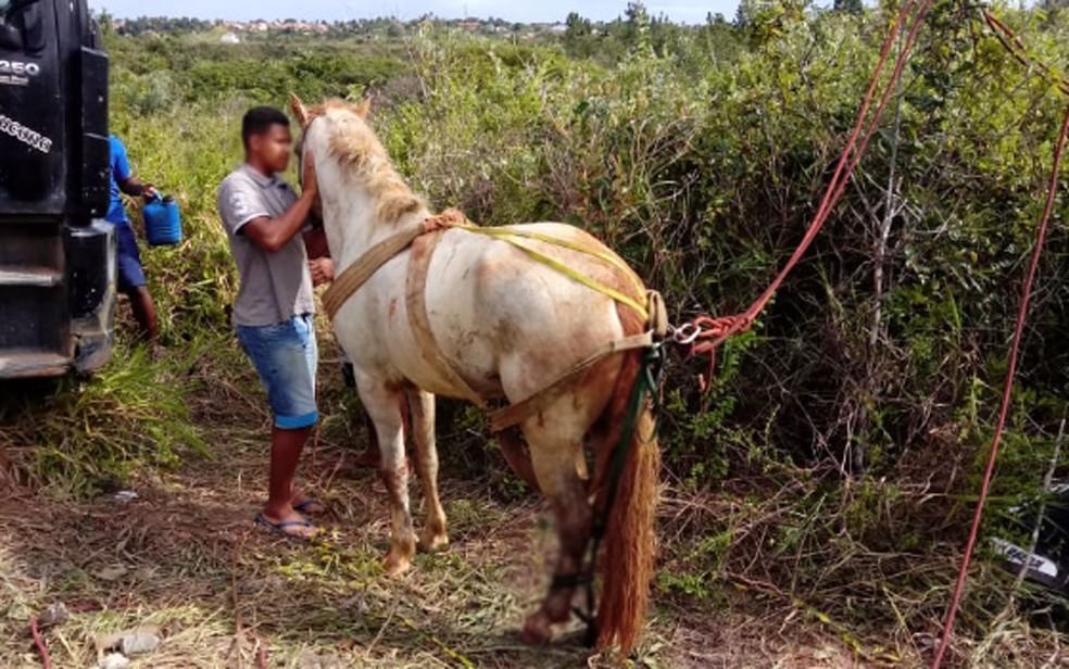Cavalo após ser retirado do poço em Esplanada, na Bahia — Foto: Divulgação/Corpo de Bombeiros