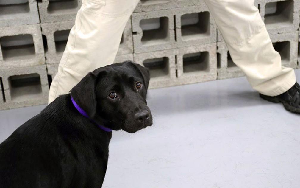 Lulu em seu primeiro dia de treinamento na CIA (Foto: Reprodução/Twitter/CIA)