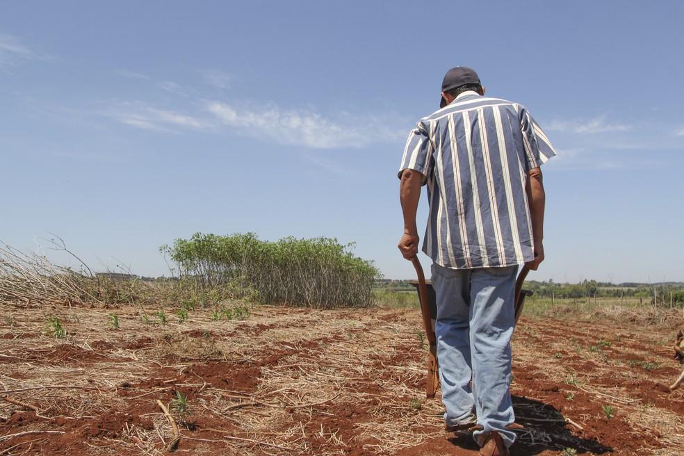 Agricultor familiar: recursos do governo para garantir fonte de renda — Foto: Fabio Rodrigues/G1