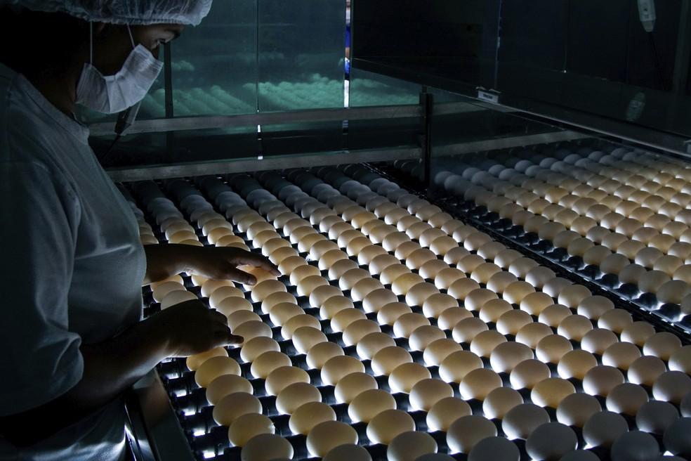 Ovos embrionados para a produção de vacinas, em laboratório da Globobiotech — Foto: Divulgação/Globobiotech