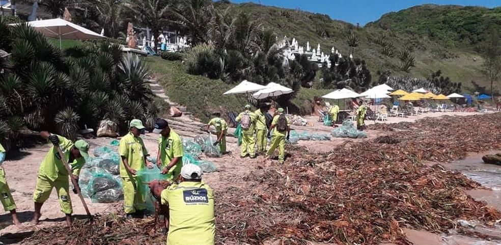 Servidores de Búzios retiram plantas da faixa de areia — Foto: Folha de Búzios