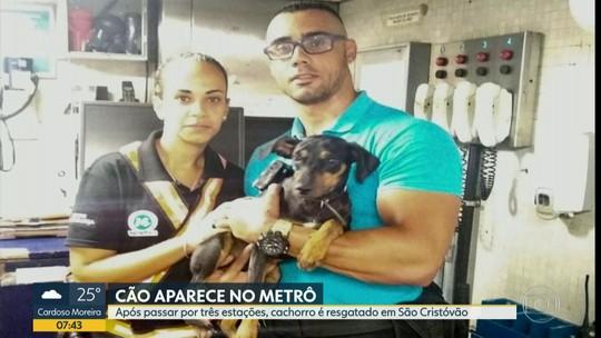 Cão é resgatado no metrô depois de andar por quatro estações