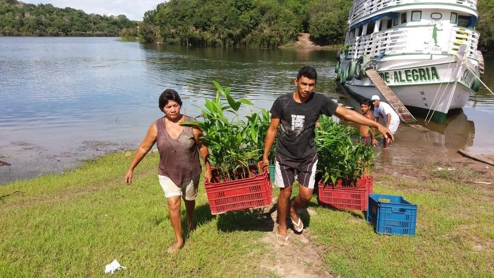Moradores de sete comunidades da região do Arapiuns receberão 12 mil mudas de plantas — Foto: Projeto Saúde e Alegria/Divulgação