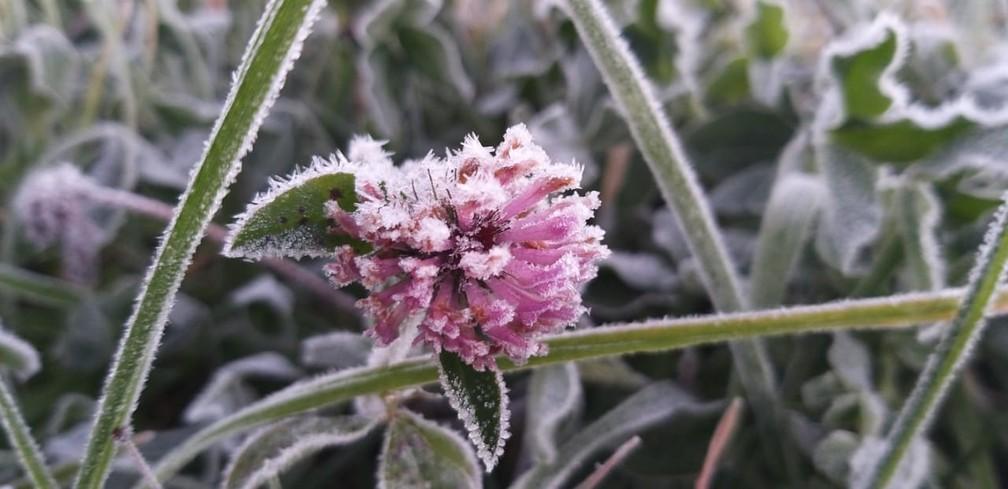 Vegetação amanheceu com uma fina camada de gelo em São Joaquim — Foto: Wagner Urbano/ NotiserraSC