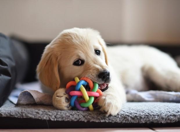 6 dicas que vão deixar sua casa e seus pets um brilho (Foto: Thinkstock)