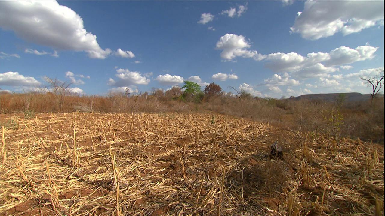 Governo Federal reconhece situação de emergência em 34 municípios do Piauí devido à seca