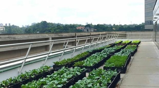 Projeto da Plant em São Paulo (Foto: Divulgação)
