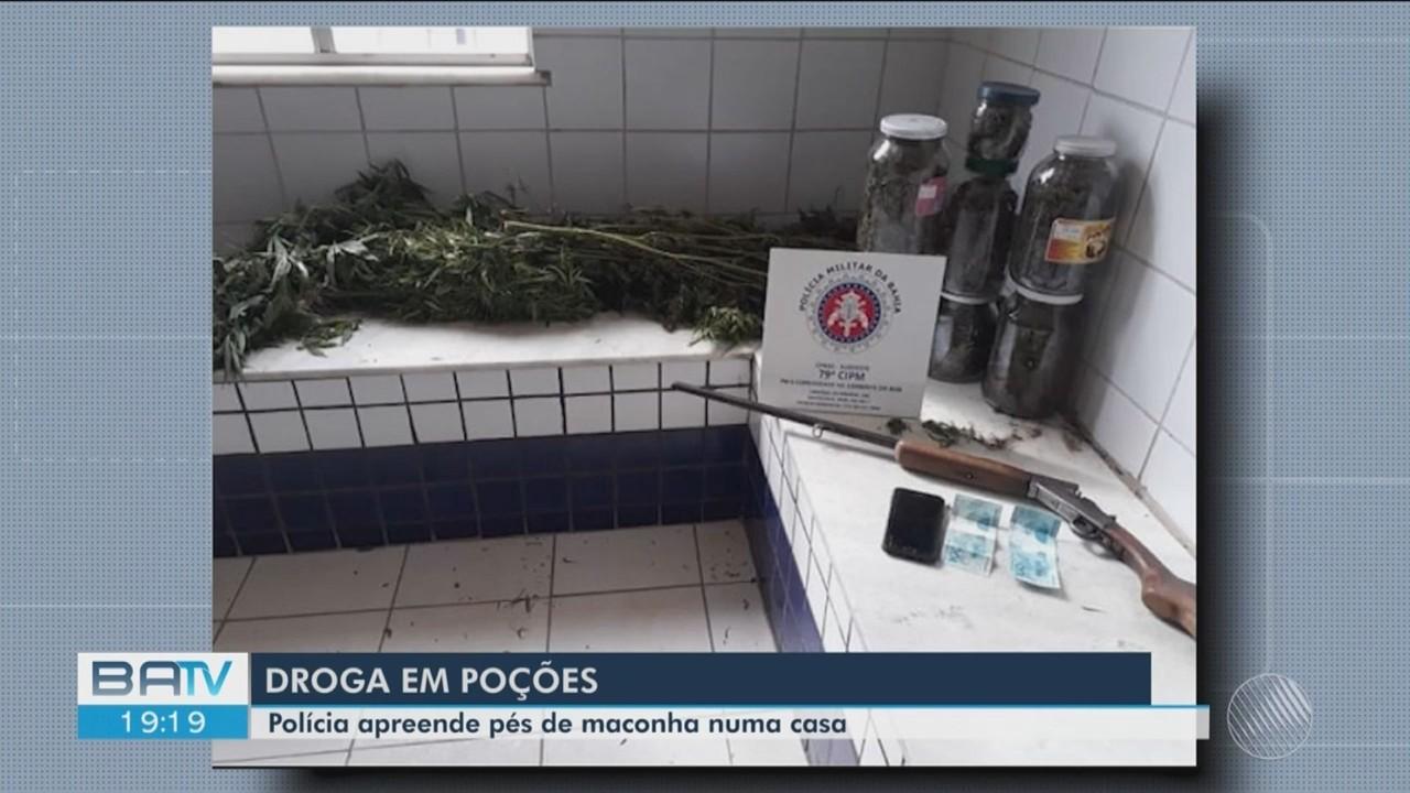 Plantação de maconha é apreendida na zona rural do município de Poções
