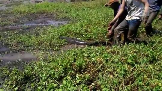 Lago é escavado para salvar peixes presos na lama em Talismã; veja o vídeo