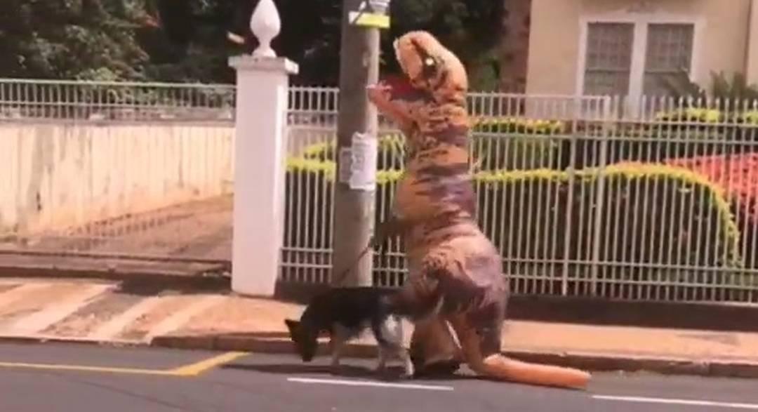 Morador de Rio Preto (SP) é flagrado passeando com o cachorro em fantasia de dinossauro