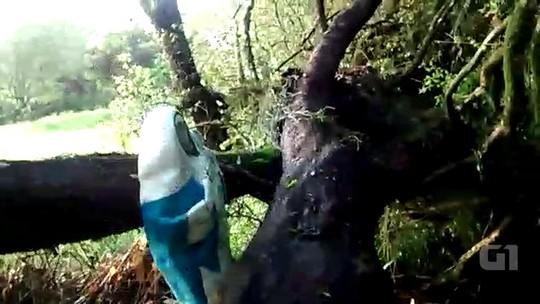 Imagem de Navegantes permanece intacta após queda de árvores no RS
