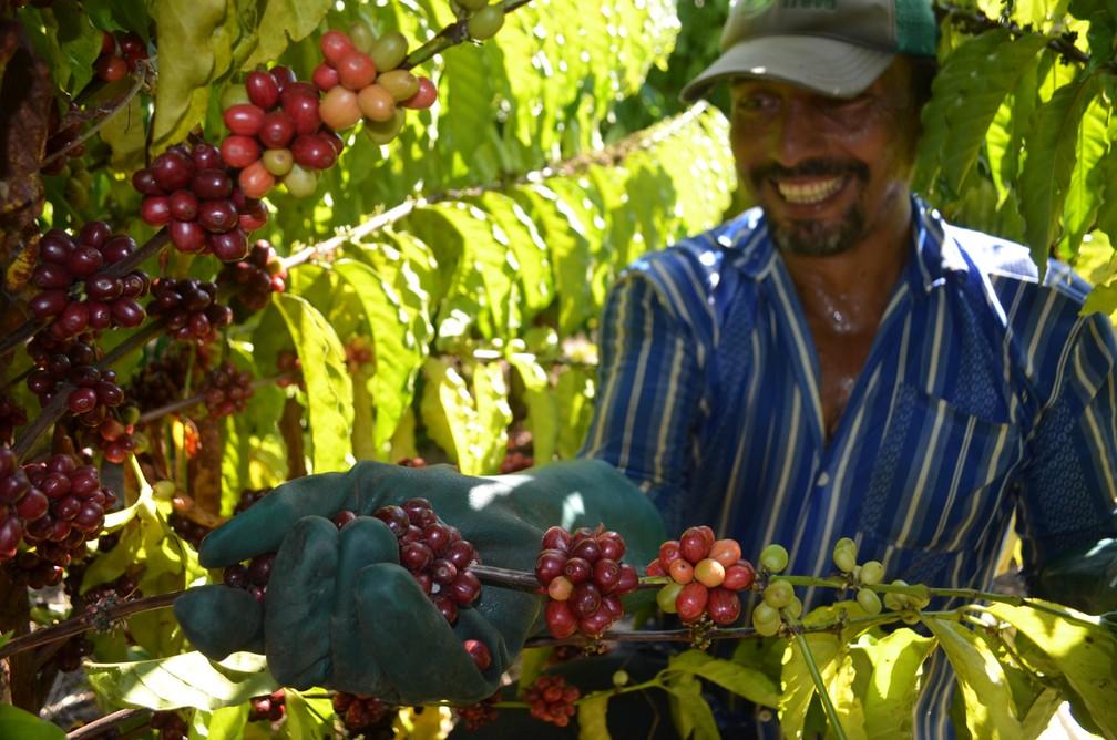 Café deve ser beneficiado em Cacoal (RO) — Foto: Eliete Marques/G1