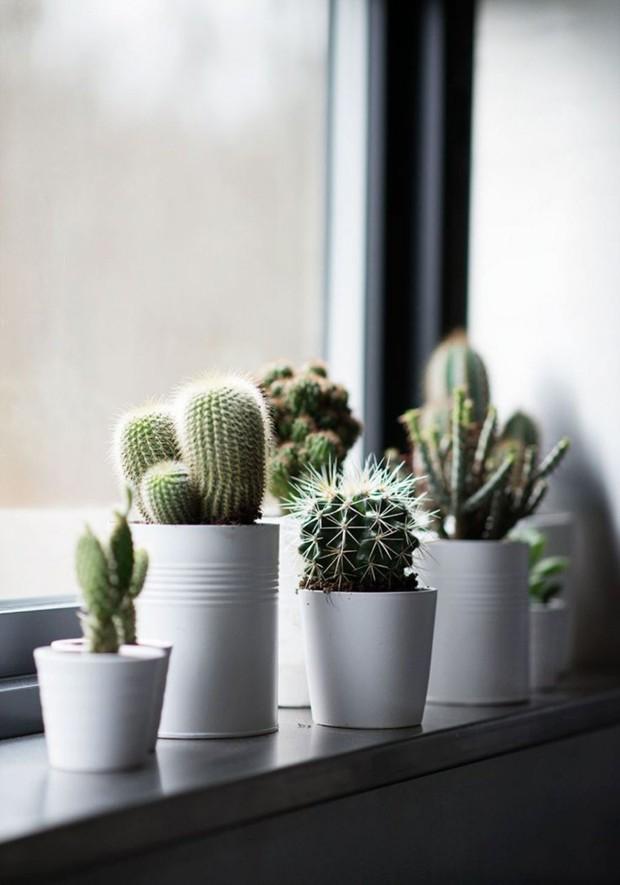 Vasos para suculentas: 15 ideias criativas de como exibir as plantas (Foto: Reprodução)