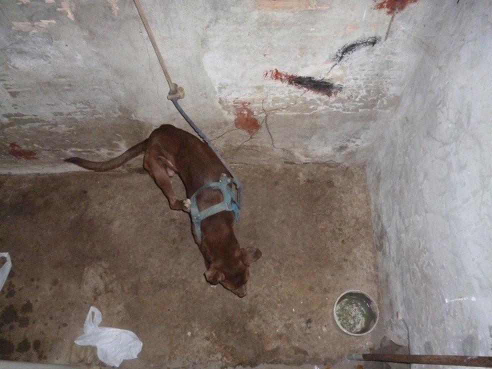 Cão foi encontrado amarrado em local precário (Foto: Divulgação/Polícia Civil)