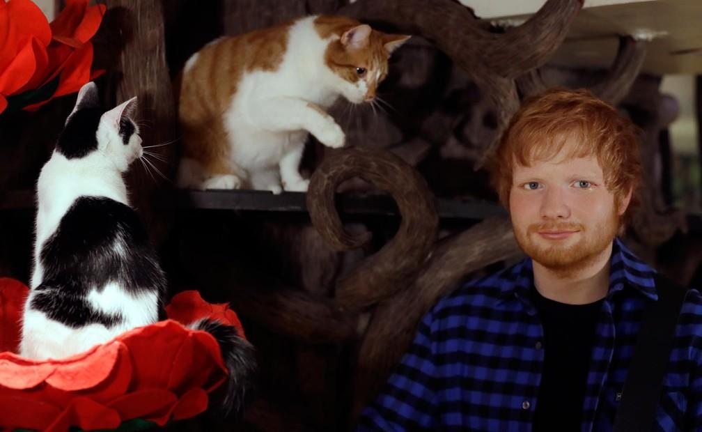 -  O cantor britânico Ed Sheeran foi homenageado com uma estátua de cera do museu britânico Madame Tussauds. A estátua foi inaugurada nesta terça-feira