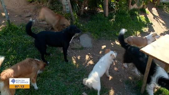 'É como se um pedaço de mim morresse', diz homem que perdeu nove cães em Herval