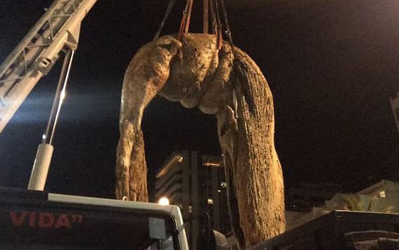 Baleia morta é removida da praia de Ipanema, no Rio