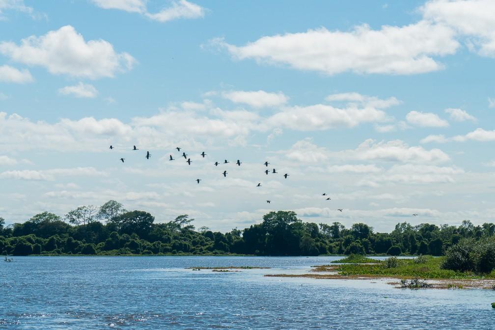 As aves do Pantanal — Foto: Eduardo Palacio/G1