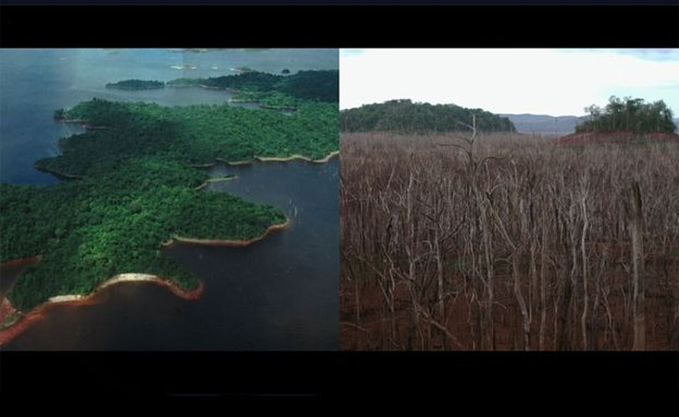 O que antes era uma bela floresta, alguns anos depois era pura devastação... — Foto: Passion Pictures/BBC
