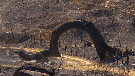Árvore famosa, cenário de minissérie de Dercy Gonçalves, é destruída por incêndio e gera comoção no interior do RJ