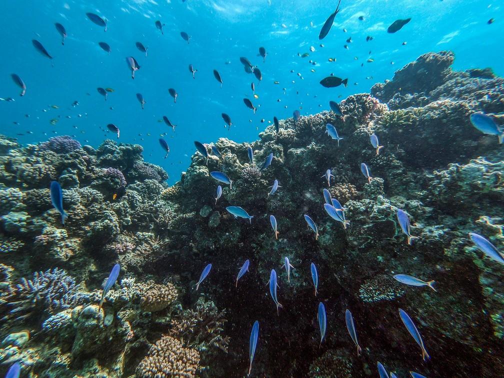 Turismo em franca expansão está ameaçando os recifes de corais de Hurghada, no Egito — Foto: Mohamed El-Shahed/AFP
