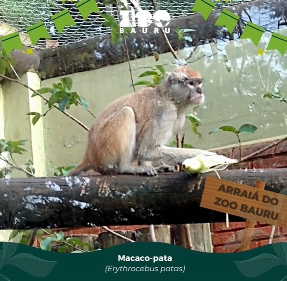 Animais de zoológico de Bauru ganham 'arraiá' junino com comidas típicas  — Foto:  Zoológico de Bauru/Divulgação