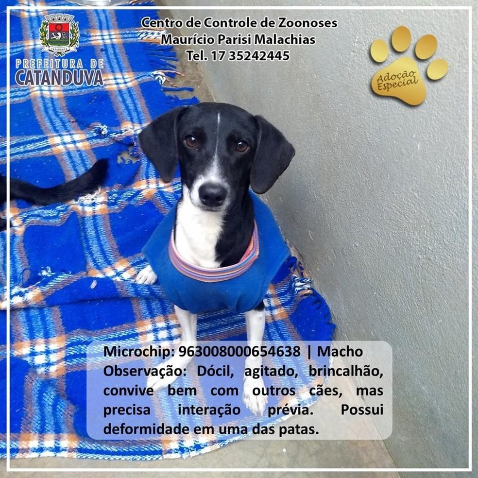 Animais que precisam de cuidados especiais recebem um selo de 'pata dourada' no topo da foto — Foto: Divulgação prefeitura de Catanduva