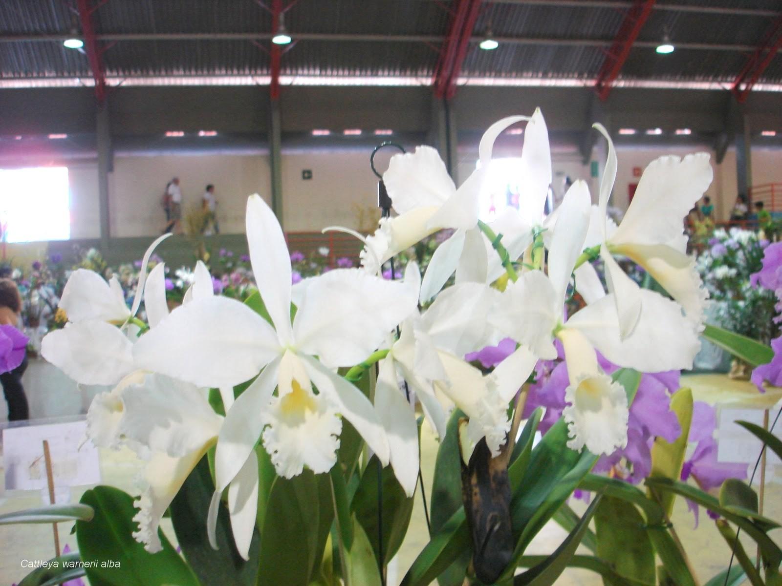 Nova edição do Orquídea Fest começa nesta sexta-feira em Divinópolis - Notícias - Plantão Diário