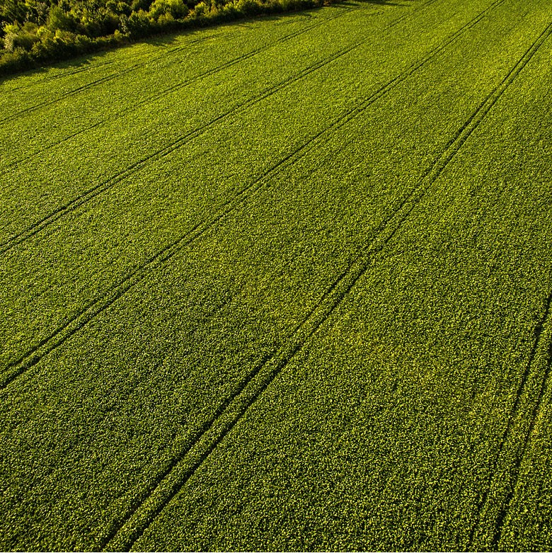 Fazenda Sustentável (Foto:  )