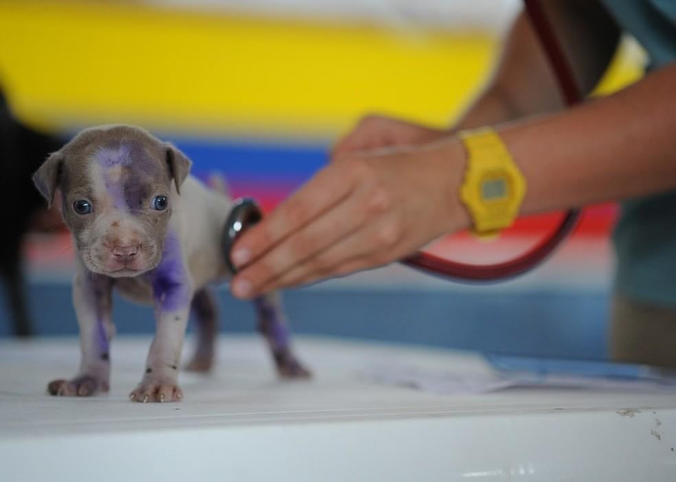 Após o parto, o animal e os filhotes devem passar por exames clínicos  (Foto: Divulgação)