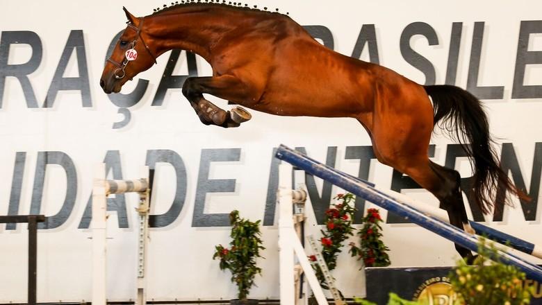 A Beleza E A Funcionalidade Do Cavalo Brasileiro De Hipismo Em São Paulo Revista Globo Rural Sebastião Nascimento