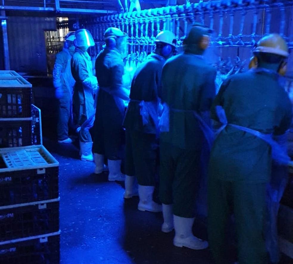 La inspección ocurrió en un refrigerador en Ipumirim, SC - Foto: Divulgación