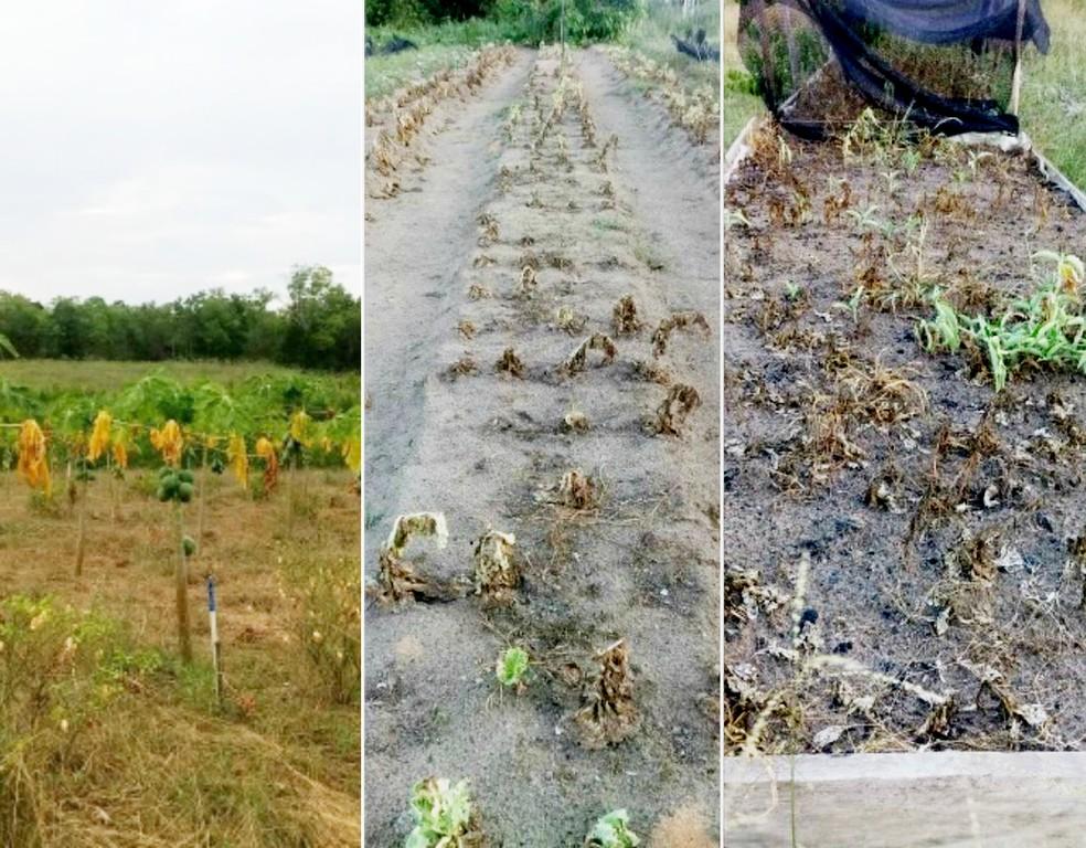 Danos pode impactar inicialmente a agricultura no Amapá — Foto: Reprodução/Tô Na Rede