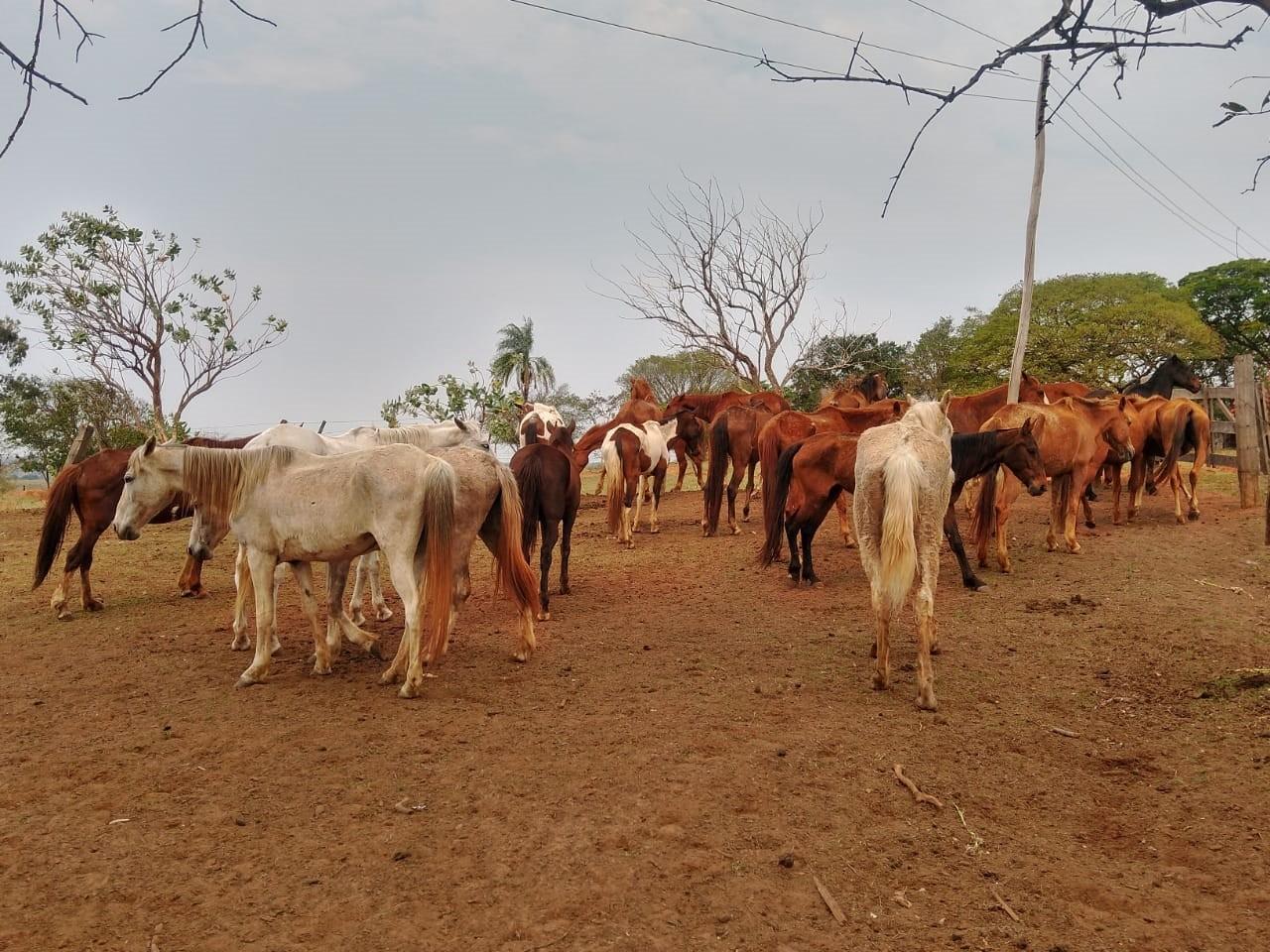 Defesa Agropecuária e Polícia Rodoviária interceptam transporte irregular de 27 cavalos entre os estados de SP e MS