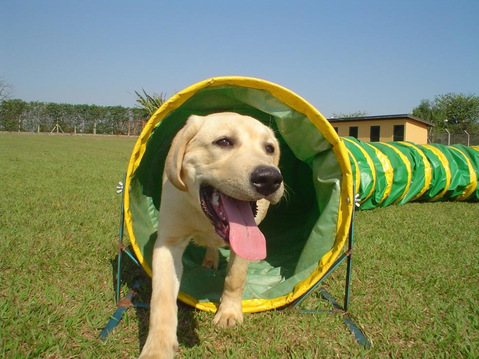 Contato com a natureza e a interação com outros cães são fundamentais para garantir o bem-estar dos animais — Foto: Clube de Cãompo/Divulgação