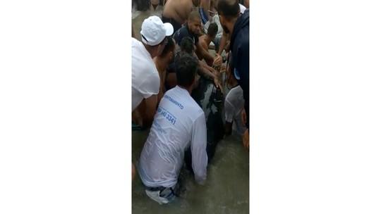 Golfinho morre após ser encontrado ferido na Praia Grande em Ubatuba