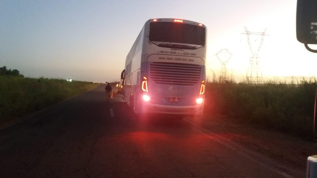 Búfalos causam acidentes com caminhão e ônibus durante madrugada no Campo de Peris
