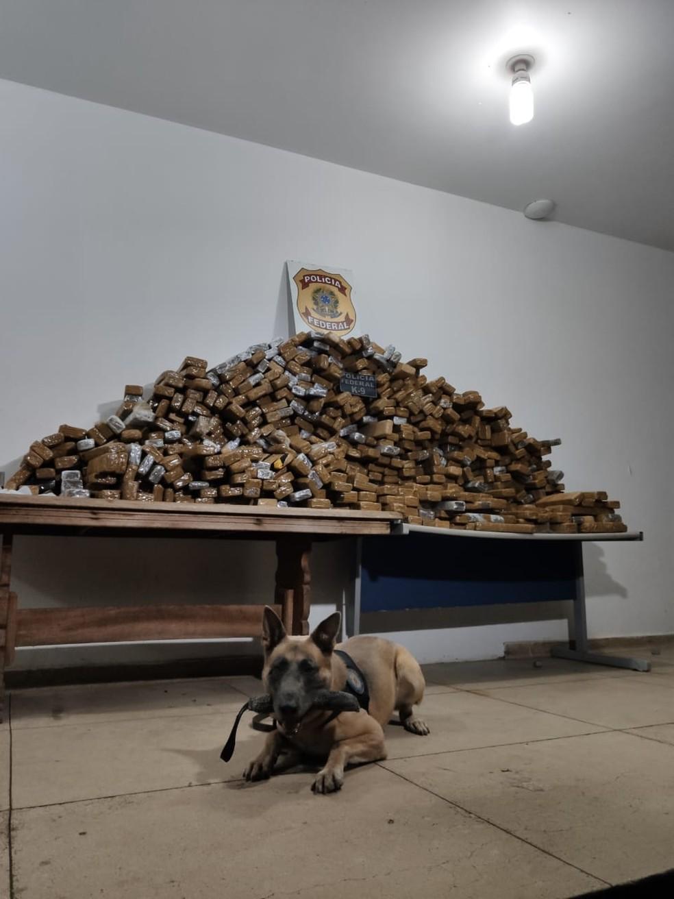 Segundo o delegado, o cão farejador apontou que havia alguma substância no interior do veículo — Foto: Polícia Federal de Mato Grosso