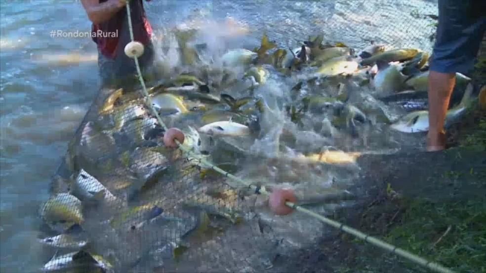 Rondônia Rural explica importância de nutrição de peixes — Foto: Rede Amazônica/Reprodução