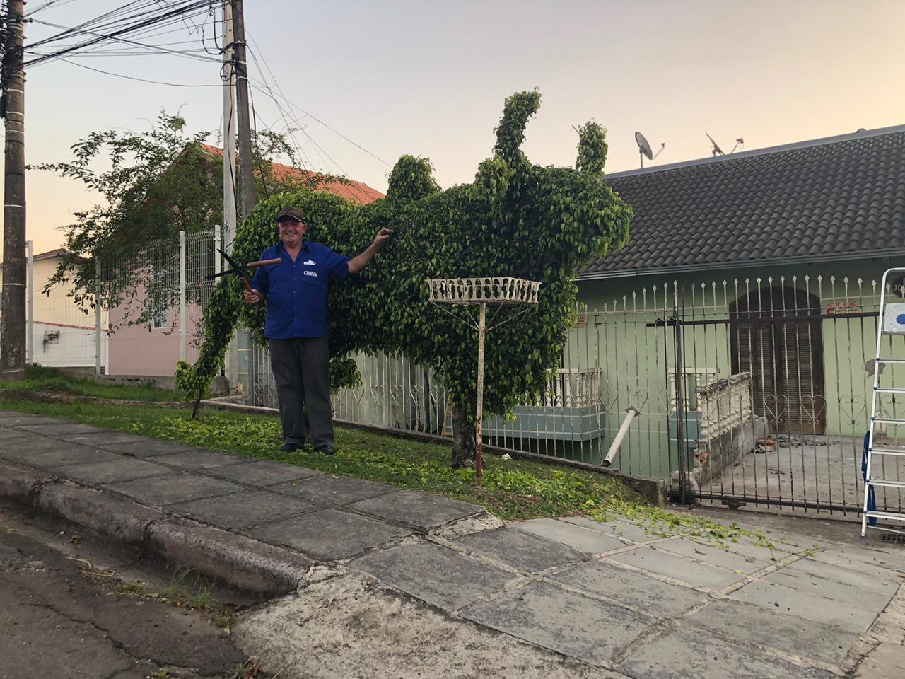 'Tem quem me chame de Edward Mãos de Tesoura', diz vendedor que esculpiu boi em árvores do quintal de casa em Curitiba