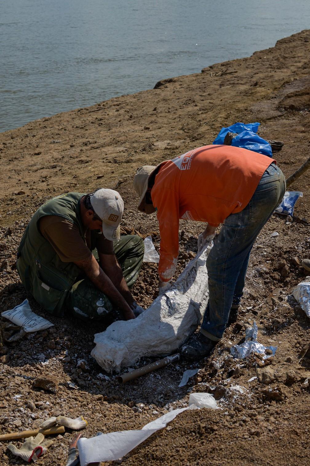 Foram achados mandíbula e crânio do purussaurus  — Foto: Ruan Fogo/Arquivo pessoal