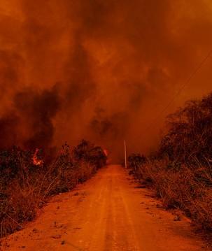Pantanal: entenda as causas e consequências dos incêndios no bioma