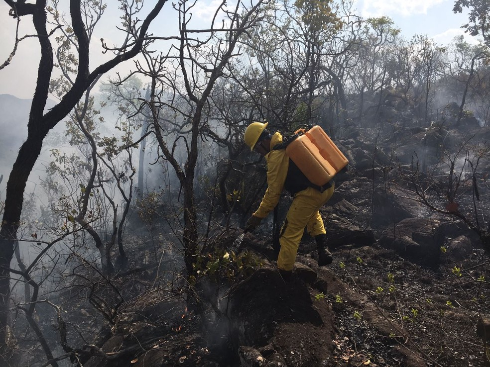Brigadistas enfrem sensação térmica de até 40 °C para combater as chamas (Foto: Vitor Santana/G1)