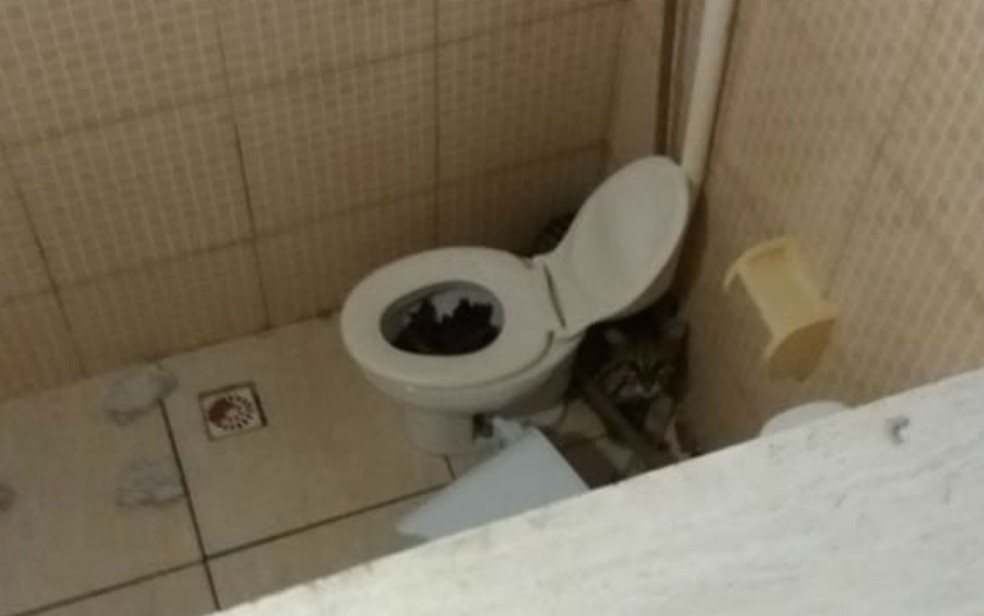 Animal estava escondido atrás do vaso sanitário (Foto: Divulgação/Polícia Militar)