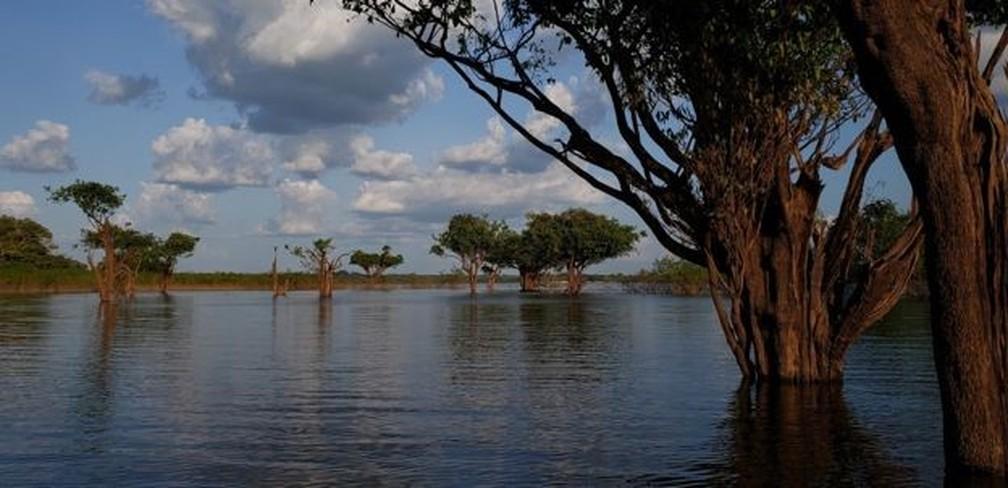 Decomposição das árvores submersas produzem impacto 25 vezes maior no efeito estufa do que antes da hidrelétrica, segundo cálculos de ecólogo da Embrapa — Foto: Dubes Sônego/BBC NEWS BRASIL