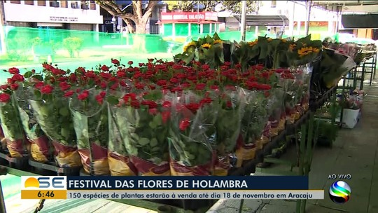 Aracaju recebe o Festival das Flores de Holambra a partir desta terça-feira