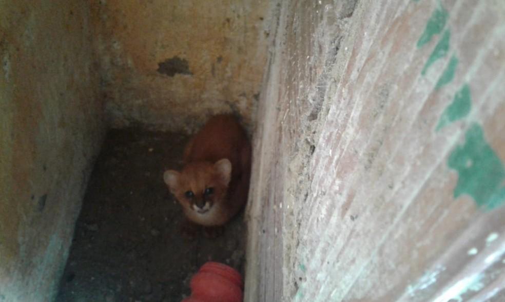 Felino estava escondido na cozinha de uma residência em São Benedito. — Foto: Francisco das Chagas/Arquivo Pessoal