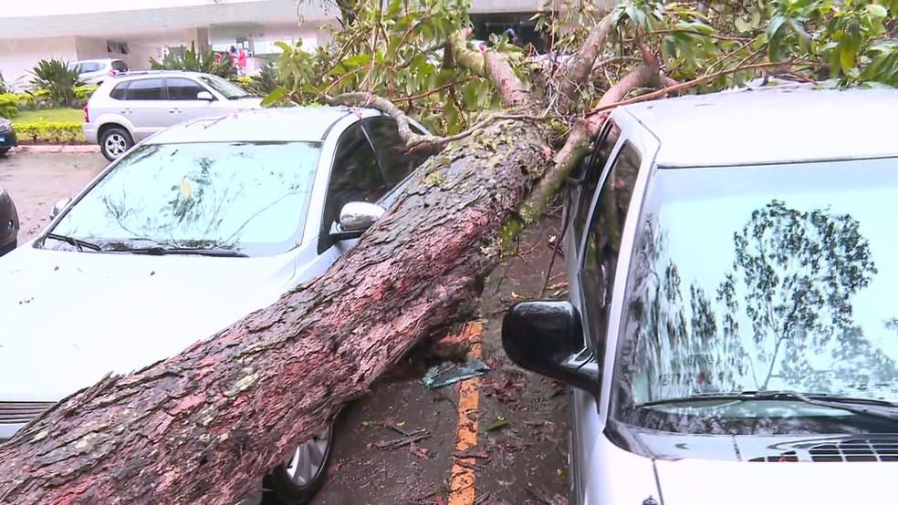 Árvore caiu em estacionamento da SQS 306, no DF — Foto: TV Globo/Reprodução